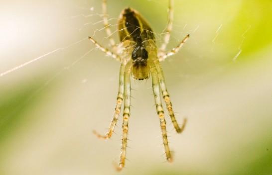 Studim: Ndryshimet klimatike mund t'i bëjnë merimangat më agresive