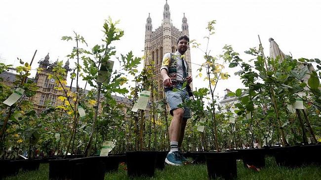 Aktivistët për mbrojtjen e klimës mbjellin pemë jashtë parlamentit britanik