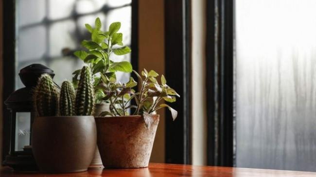 Bimët shtëpiake 'në fakt' nuk pastrojnë ajrin