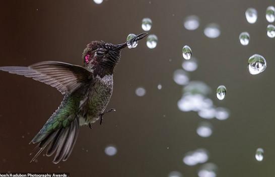 Imazhe mahnitës që dëshmojnë se përse natyra është kaq e bukur dhe mistike