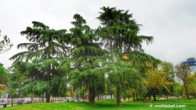 Moti sot i ngrohtë dhe me diell, të dielën më freskët e reshje shiu në Shqipëri