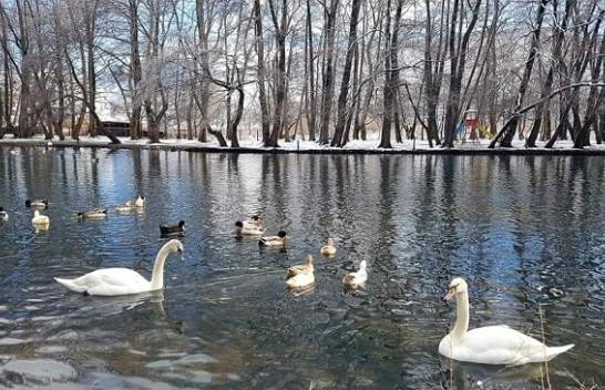 Parku i Drilonit mbulohet nga bora, merr pamje të mrekullueshme