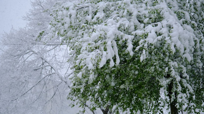 Regjistrohet mëngjesi më i ftohtë i prillit ndonjëherë në Slloveni