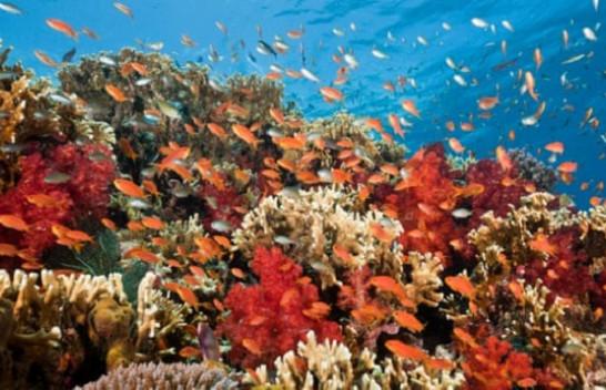 Një aplikacion në telefon/ Zgjidhja e shkencëtarëve të NASA-s për të shpëtuar koralet