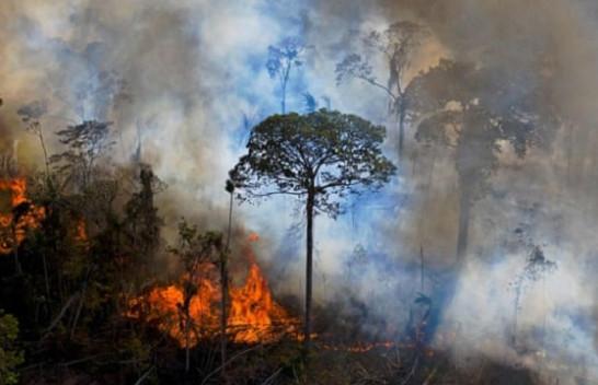 Pyjet e Amazonës lëshuan më shumë karbon sesa thithën gjatë 10 viteve të fundit