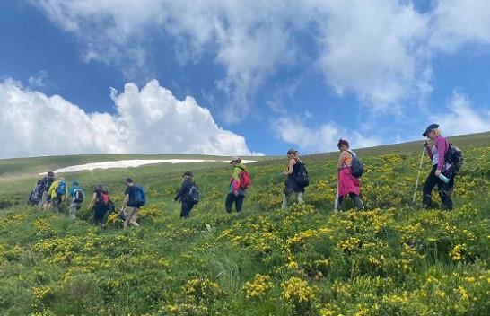 Shtegu i Ngjyrave – Magjia e livadheve Alpine