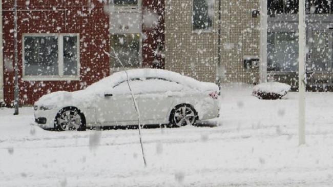 Troket dimri, bie borë në Finlandë [Foto]